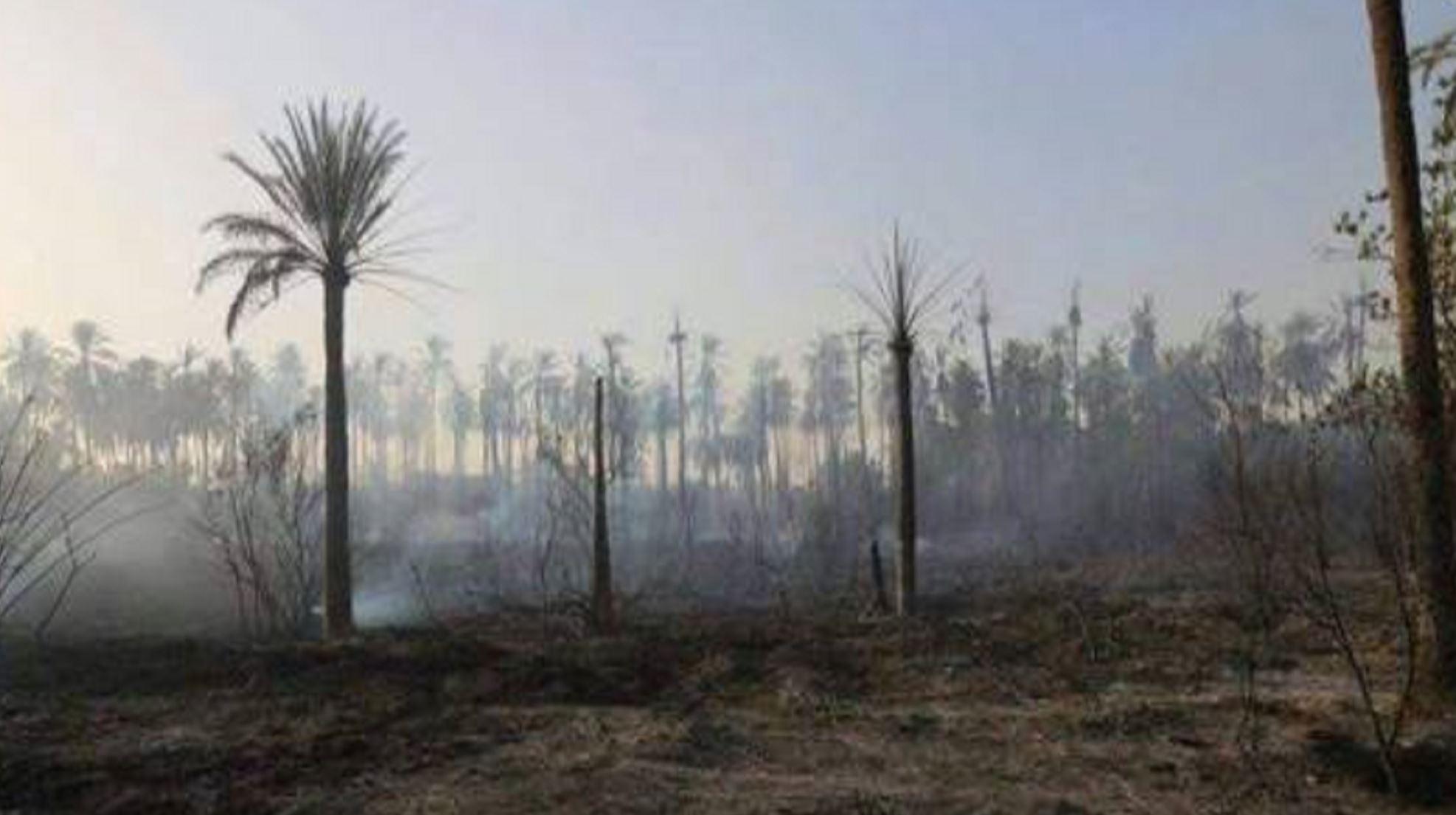 حريق هائل في 4 بساتين شرقي ديالى