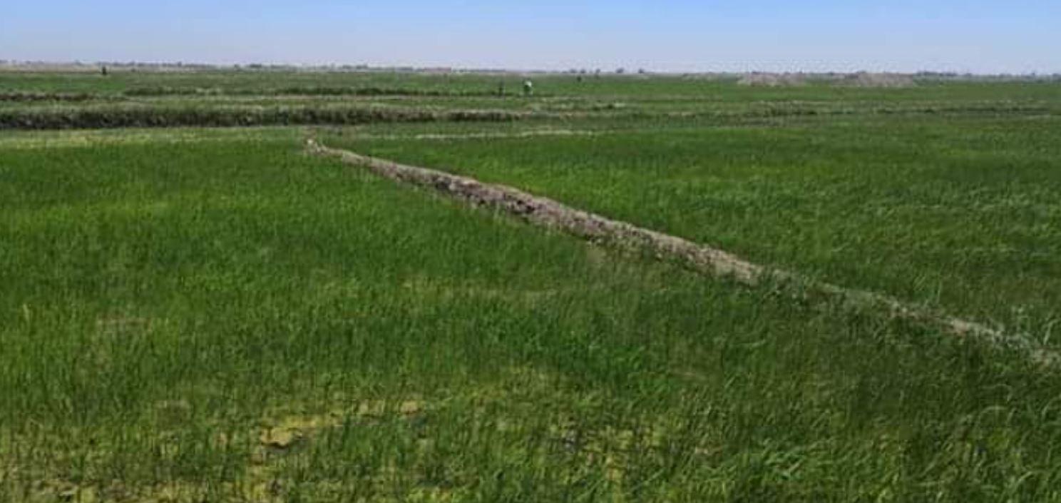 زراعة أكثر من ٢٨ ألف دونم من الخطة الصيفية في المثنى