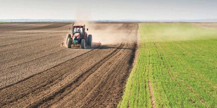 خبير: الزراعة تعاني في العراق والحكومة لا تمتلك رؤية مستقبلية لتطويرها