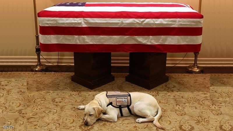 بالصورة.. كلب بوش لا يتخلى عنه حتى بعد موته