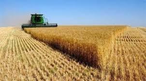وصول نسبة تسويق محصول الحنطة الى 36 الف طن في سايلو الناصرية