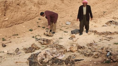 العثور على 15 جثة تعود لعناصر تنظيم داعش غربي مدينة الرمادي