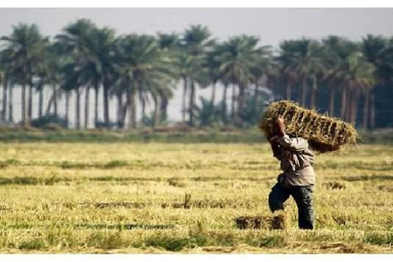 الزراعة النيابية تطالب بتضمين حقوق الفلاحين في الموازنة