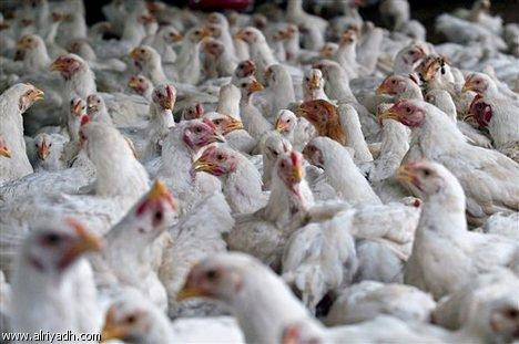 الزراعة تعلن عن إيقاف استيراد الدواجن والطيور بأنواعها من ايران والسبب ؟؟