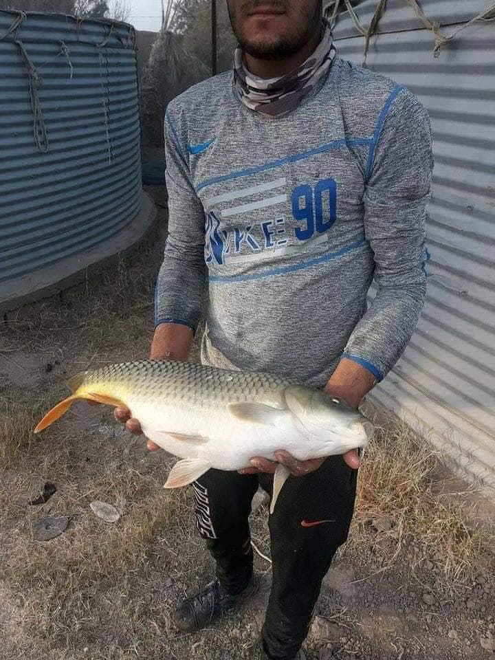 بالصور ..  مشاريع جديدة لتربية الاسماك في الانبار