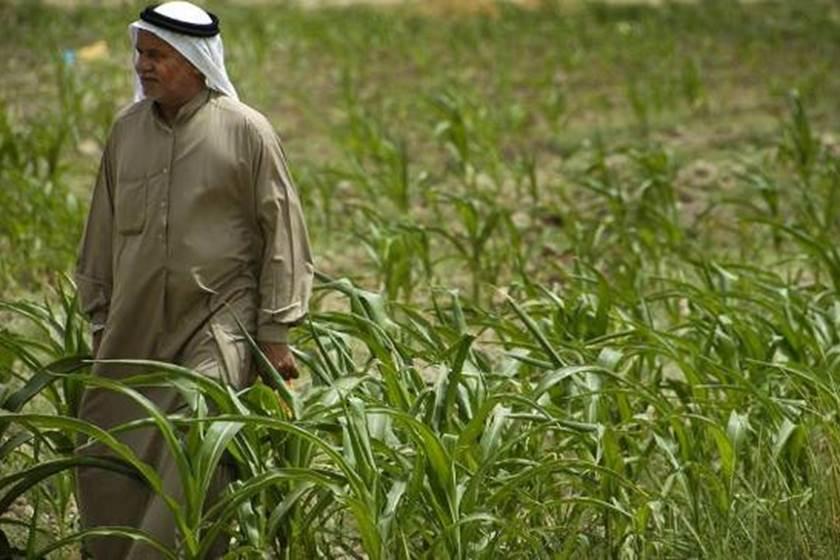 الزراعة: منع الاستيراد اعاد اكثر من 4 الاف مزارع الى مزاولة عملهم في ديالى