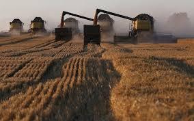 ابرام عقودا مع شركات عالمية لتأمين ٣٦٠ الف طن من الحنطة والرز