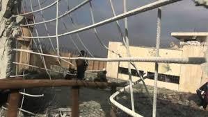 16 قتيلا فى غارة جوية على سجن فى إدلب بشمال غربى سوريا