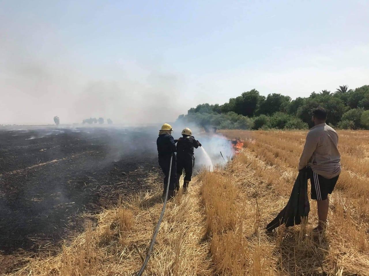 إخماد حريق اندلع في 3 بساتين و400 دونم في ديالى