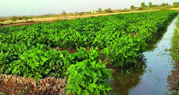 الزراعة تكشف عن خطة طموحة لانتاج محاصيل اضافية خلال الشتاء المقبل