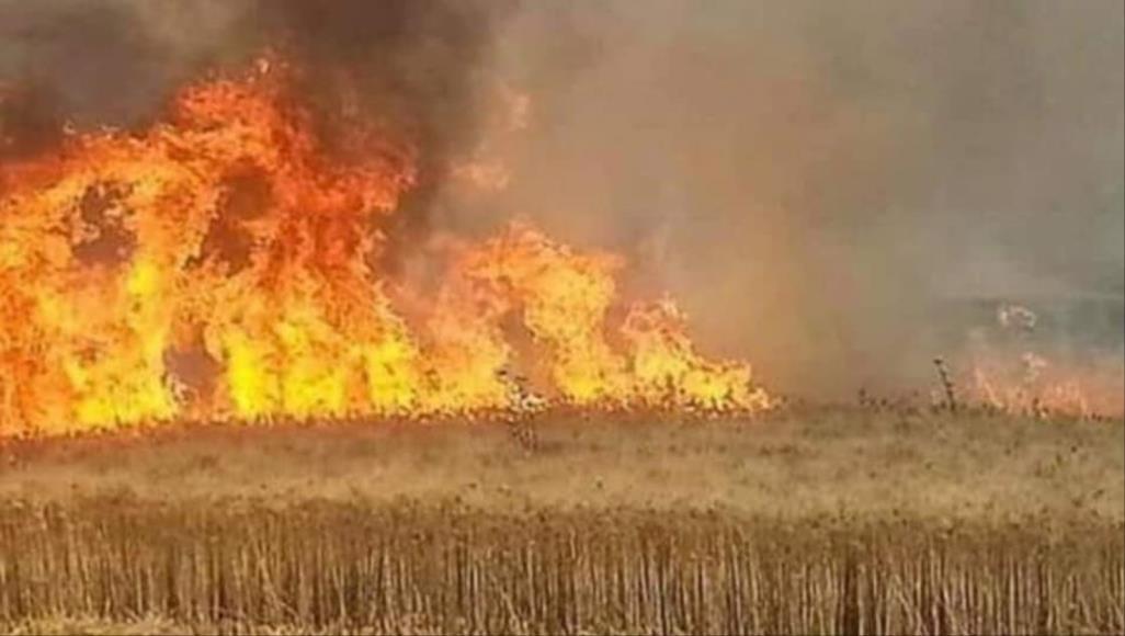 لجنة الزراعة: ما يتعرض له البلد مؤامرة خارجية داخلية لتدمير اقتصاده