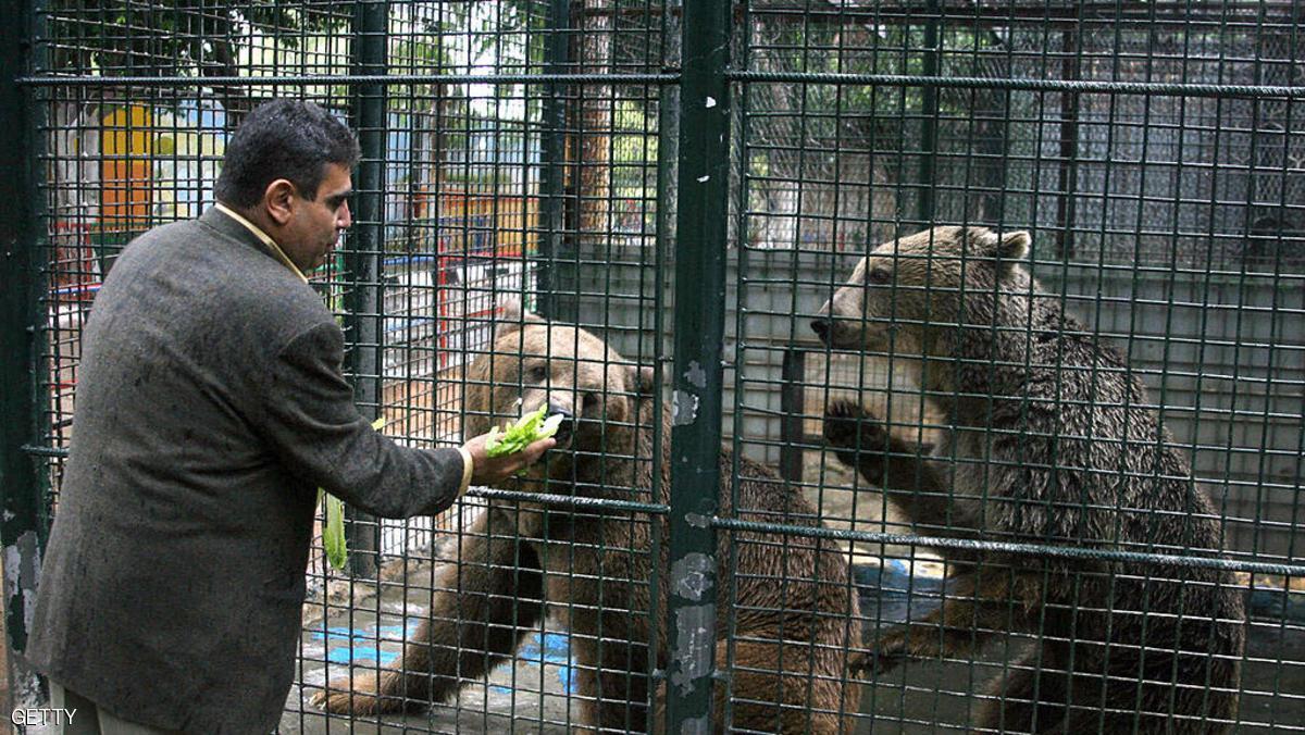 دب يلتهم يد طفل بحديقة حيوان بالضفة الغربية