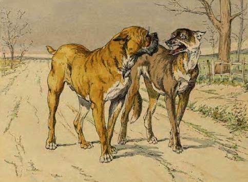 حوار بين كلب الشارع وكلب من المنطقة الخضراء ( إقتباس بتصرف )