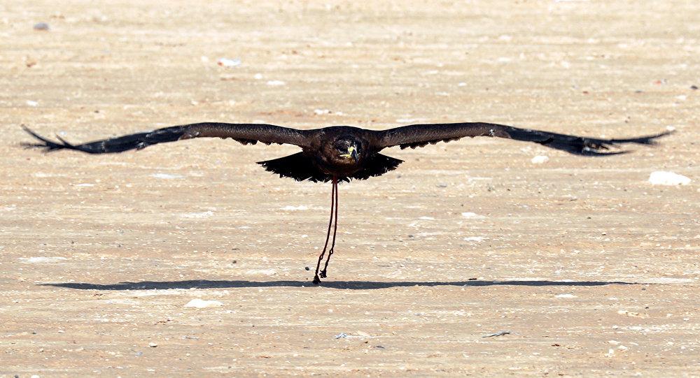 اكتشاف بقايا طائر يعود للعصر الطباشيري القديم