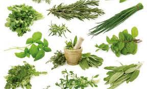 دراسة توضح أكثر الأعشاب فائدة للجسم في فصل الصيف