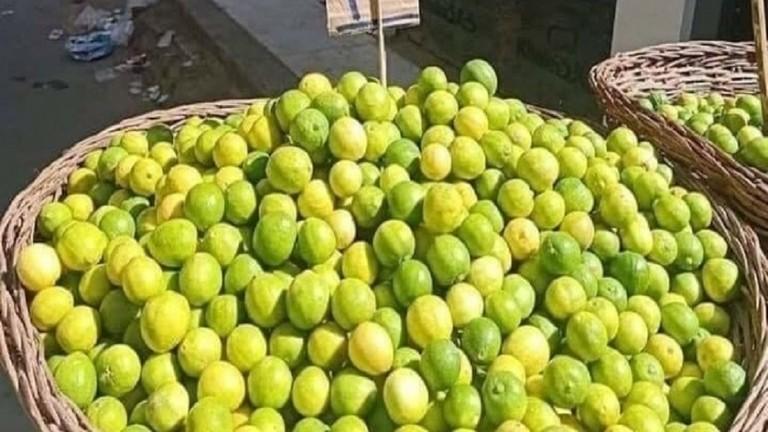 الكشف عن أسباب ارتفاع أسعار الليمون المصري
