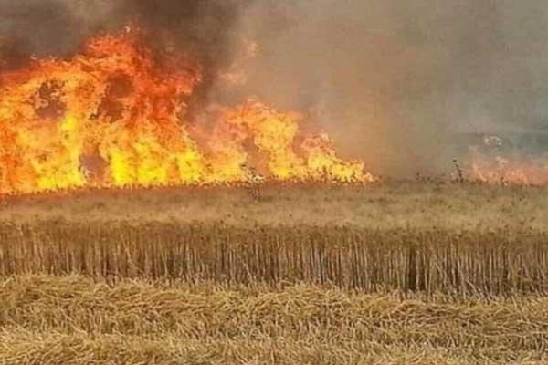تضرر 62 الف دونم جراء الحرائق في نينوي
