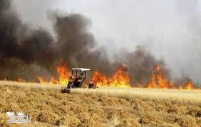 الزراعة: سيتم تعويض أي مزارع اذا كان الحريق بمزرعته مفتعلاً