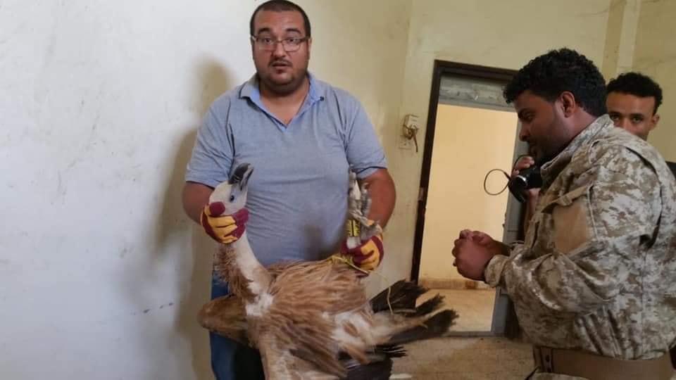 """قصة مثيرة تنهي رحلة """"الطائر نيلسون"""" ليقع أسيرًا في اليمن وهكذا انتهى مصيره!"""