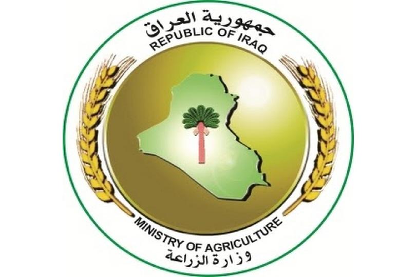 الزراعة توقف تسويق الحنطة في صلاح الدين بعد استلام 634 الف طن لهذا الموسم