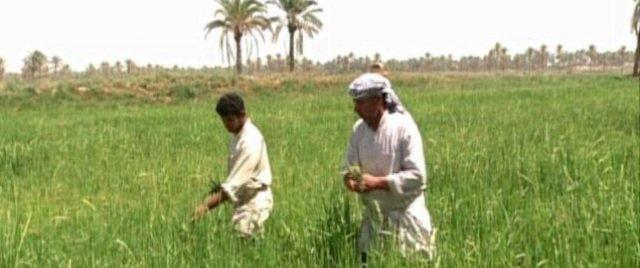 التجارة تستكمل توزيع الصكوك الخاصة بمستحقات الفلاحين والمزارعين