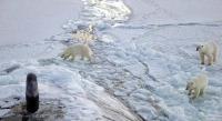 عالم روسي: القطب الشمالي سيذوب تماما في عام 2030