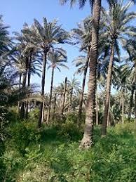 داعش يقصف قرية زاغنية في ديالى دون تسجيل اصابات