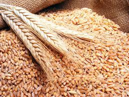 التجارة تجرّب عملية طحن ٥٠ طناً من الحنطة