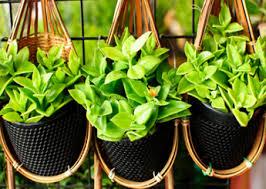 تنبيه .. هذه النباتات لا تحتفظوا بها في منازلكم لأنها تعتبر ضارة وبعضها سام ؟؟؟!!