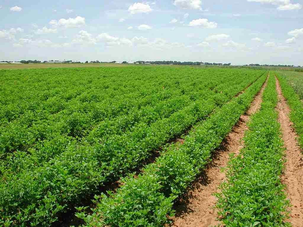 الزراعة النيابية: الحزام الاخضر حول المدن خطوة مهمة لزيادة الاراضي الزراعية