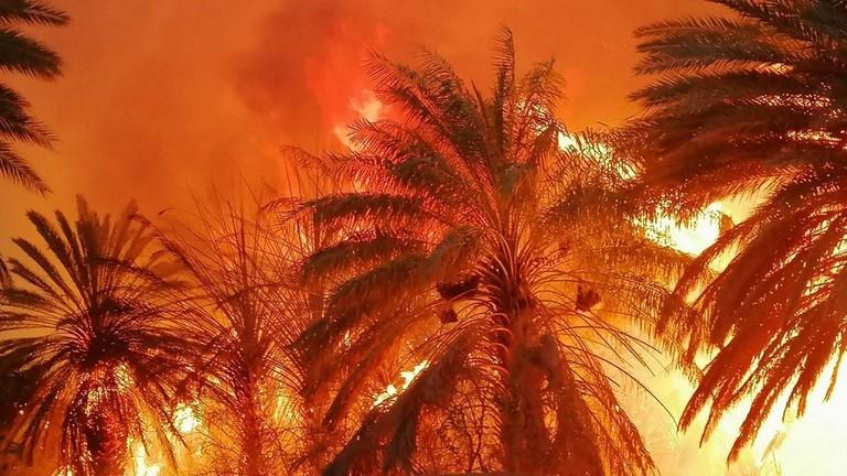 حريق هائل يلتهم مزارع نخيل في الجوف في السعودية
