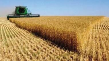 مستحقات مزارعي الحنطة والشعير تطلق بعد انتهاء التسويق