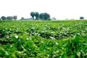 الزراعة توقع اتفاقية تعاون بين العراق والأردن بخصوص المجال الزراعي