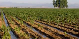 المثنى: تشكيل لجان لمتابعة صرف القروض الزراعية
