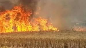 الزراعة النيابية: صبر البرلمان لن يطول إزاء إجراءات الحكومة البطيئة بشأن حرائق المحاصيل