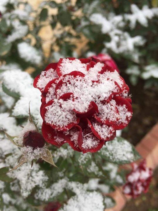 (بالصور) كيف بدت الأجواء الشتوية في كركوك صباح اليوم ؟؟