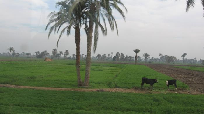 الزراعة: الوضع المالي العام  في البلاد أخر عملية صرف القروض الزراعية